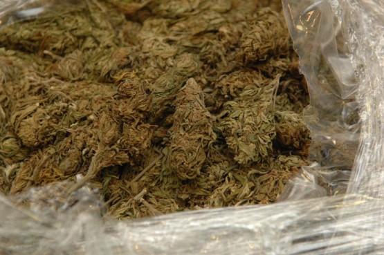 BLATO NA KORČULI Kod 34-godišnjaka pronađeno 13 grama marihuane