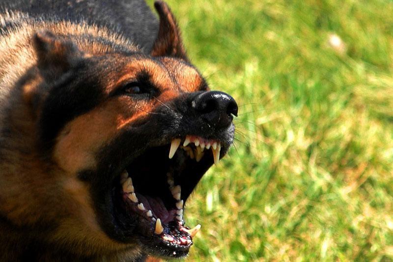 Dva napada psa u istom danu
