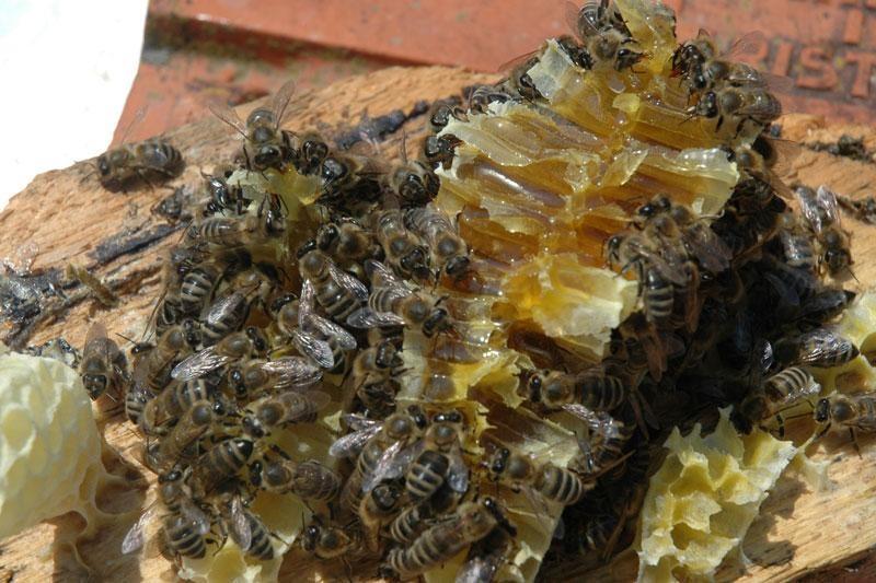 Koje su mogućnosti razvoja pčelarstva
