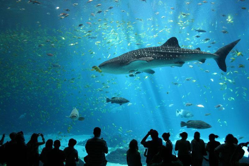 Akvarij od 60 milijuna eura isplativ, ali…