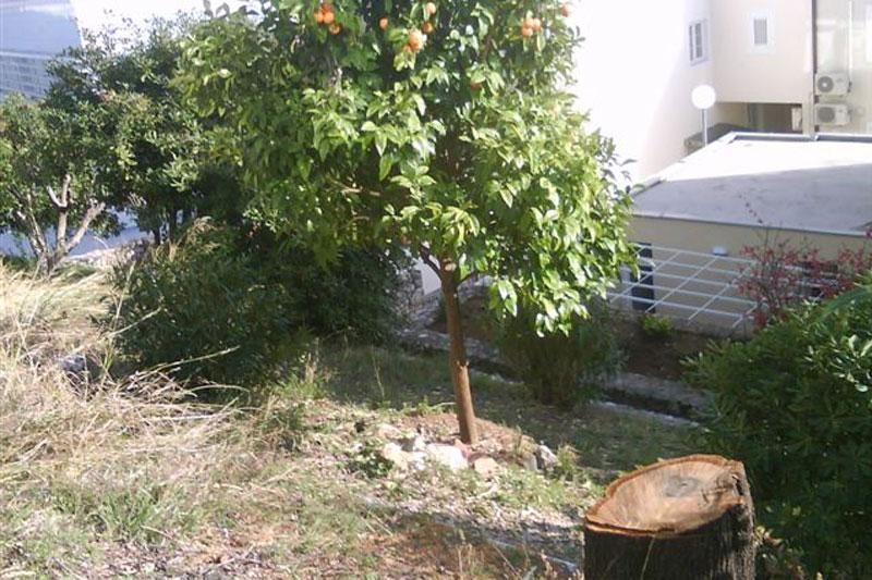Eko-Omblići: Opet sječa zdravih stabala