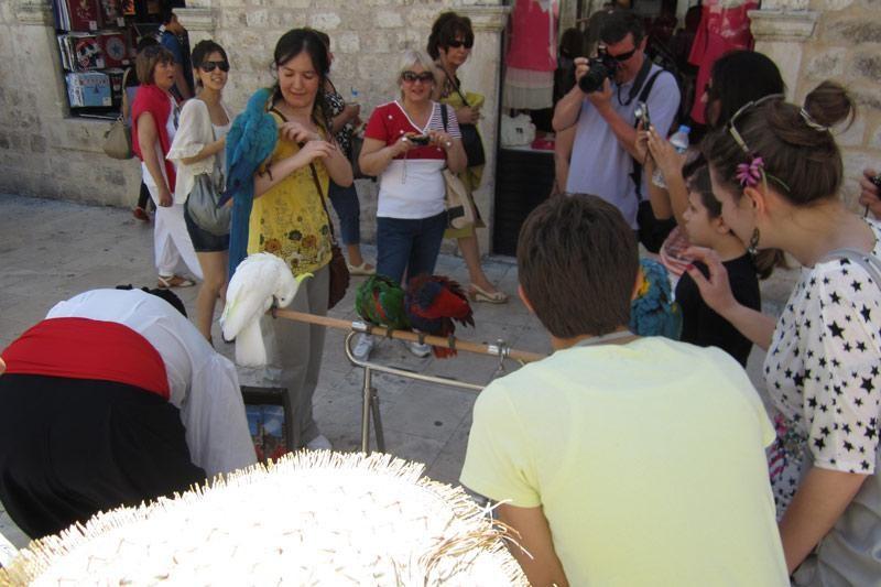 Turisti, papige i Ljubiša Samardžić
