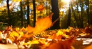 UŽIVAJTE U NEDJELJI Stigla nam je jesen!
