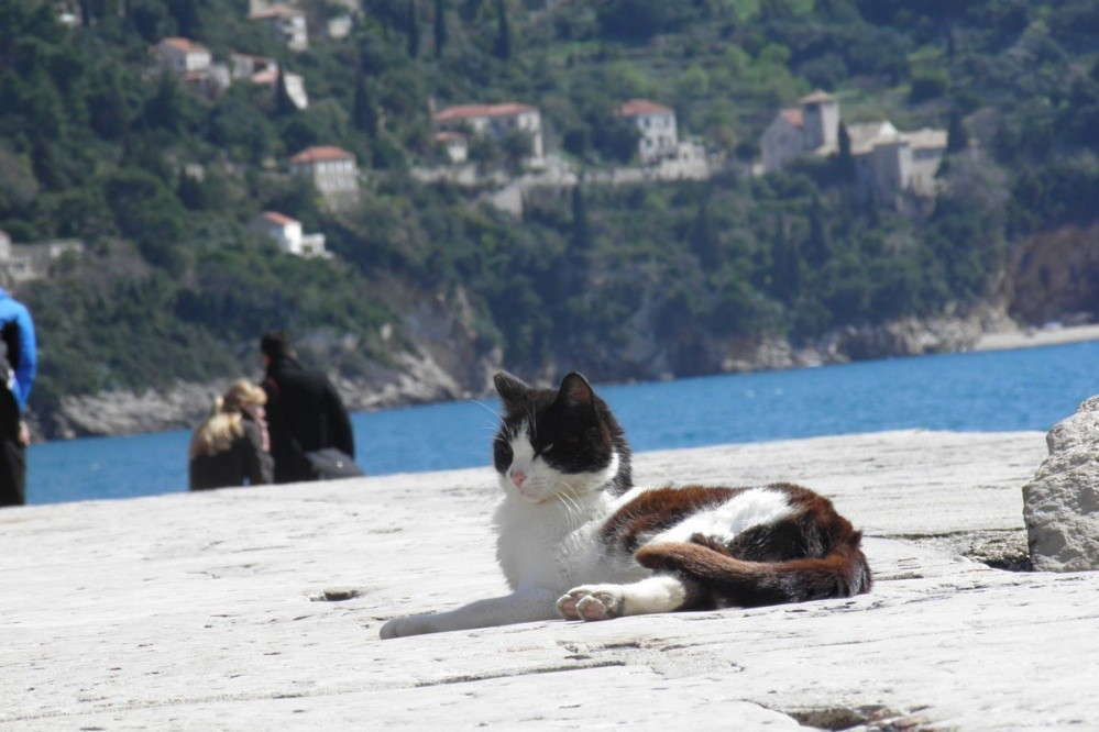 Mačka na sunce