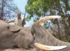 safarimashambanzou.com