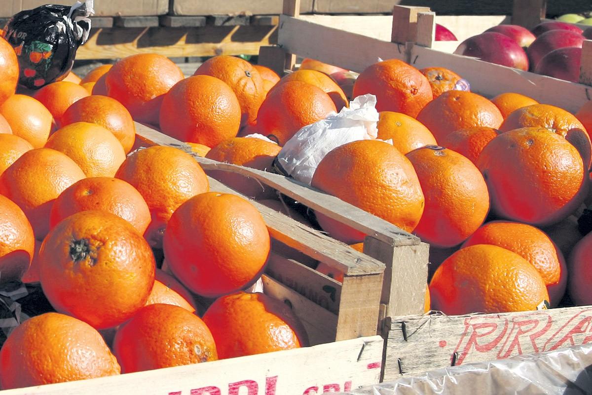 Mandarine na placi u Gružu