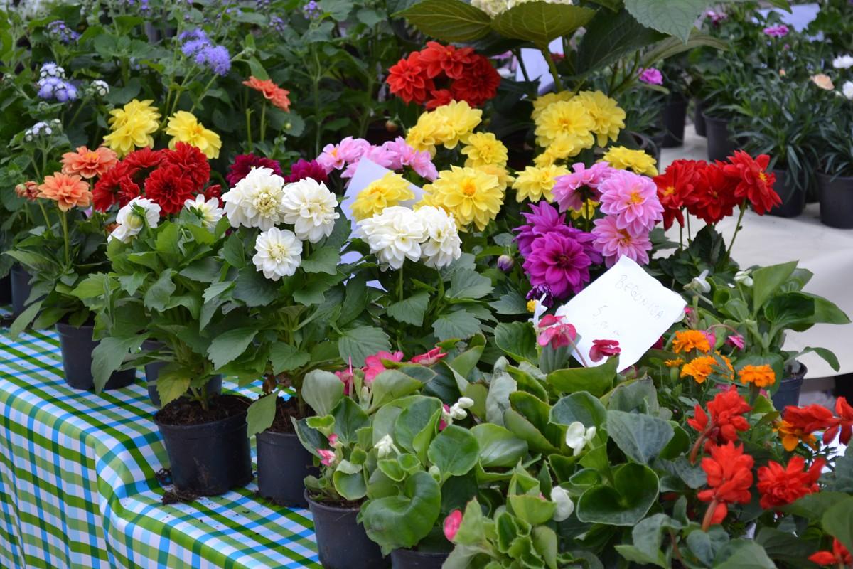 Sajam cvijeća Lapad