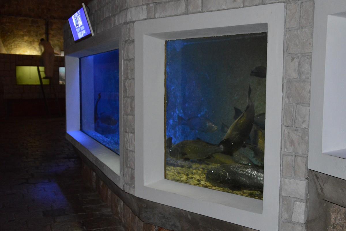 Rak datira akvarij