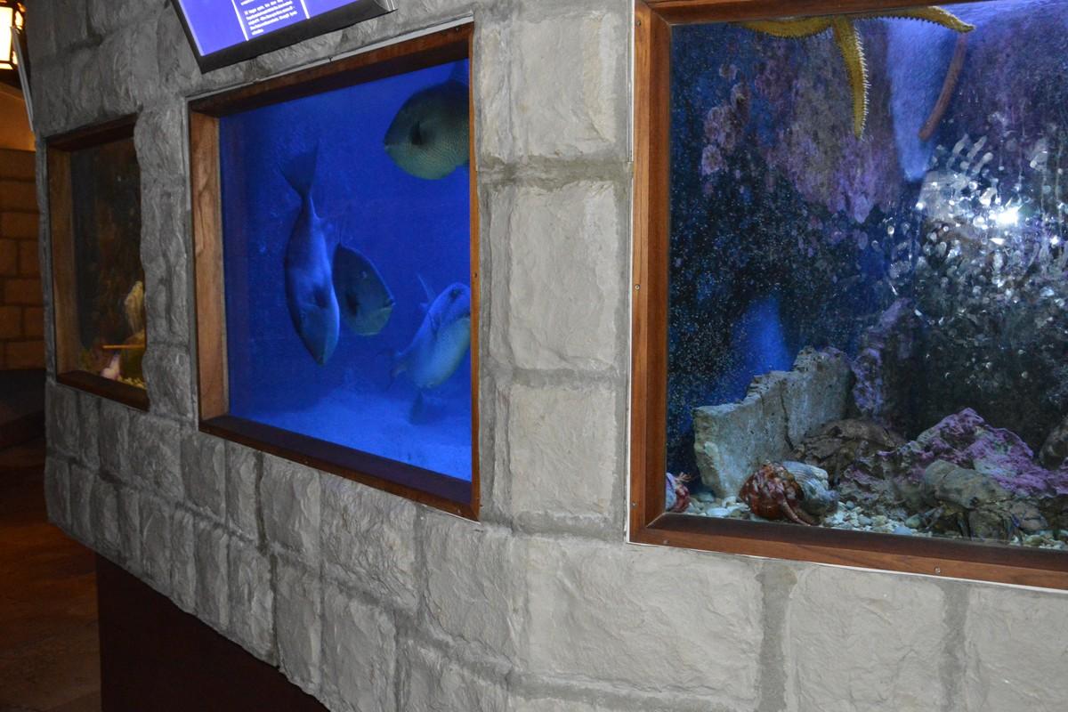 Akvarij datiranje
