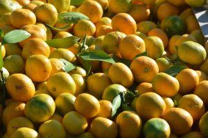 LJUBITELJ AGRUMA 'Počistio' prodajni pult pa preprodao 350 kilograma mandarina