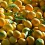 Neretvanska mandarina dobila zaštitu izvornosti u EU