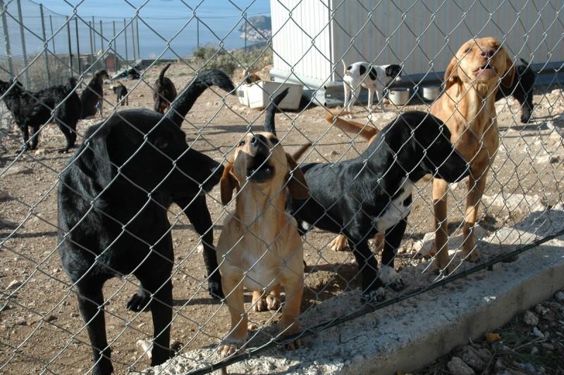 PLJUSKA IZ MINISTARSTVA 'Ne zatvaramo azil i nismo rekli Vlahušiću da ne hrani pse! Neka Grad konačno riješi problem!'