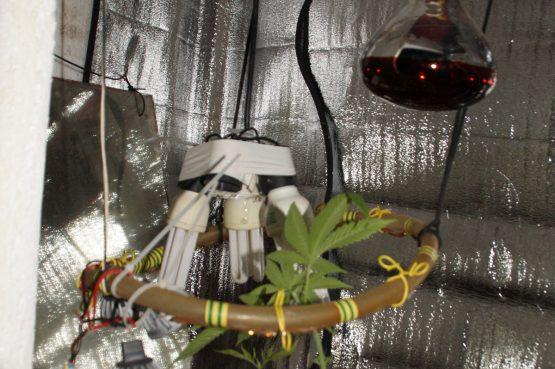 Na Korčuli pronađen laboratorij za kućni uzgoj indijske konoplje
