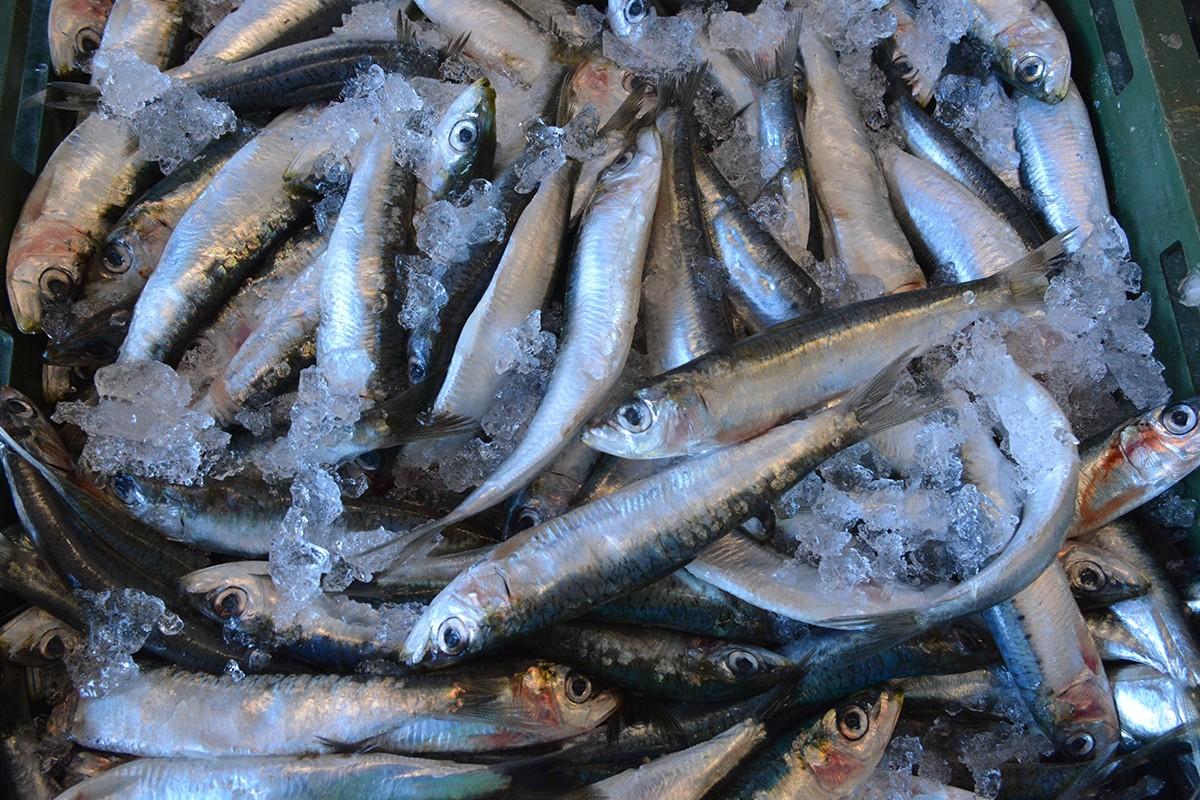 Gruška placa i peskarija riba