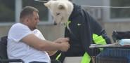 VIDEO / FOTO Čak 850 prelijepih pasa u Gospinom polju!