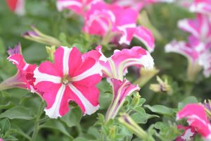Sajam cvijeća na Pošti Lapad @ Trg na Pošti Lapad   Dubrovnik   Dubrovačko-neretvanska županija   Hrvatska