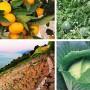 Tko će sve dobiti potpore u poljoprivredi i ruralnom razvoju?
