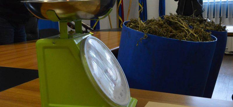 Kod 13 osoba pronađena marihuana, hašiš i ecstasy