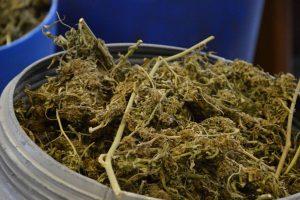 21-godišnjak 'pao' s 50 grama marihuane