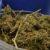 GRANIČNI PRIJELAZ KLEK Kod 20-godišnjeg Albanca nađeno 10 kilograma 'marice'