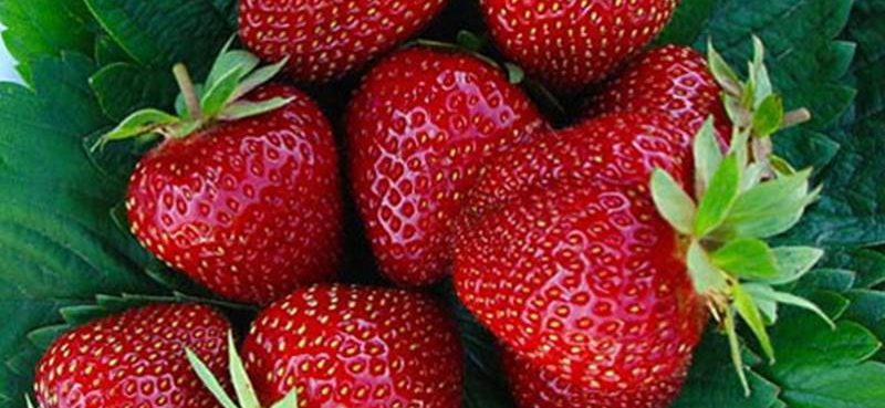 U subotu kušajte sočne stonske jagode!