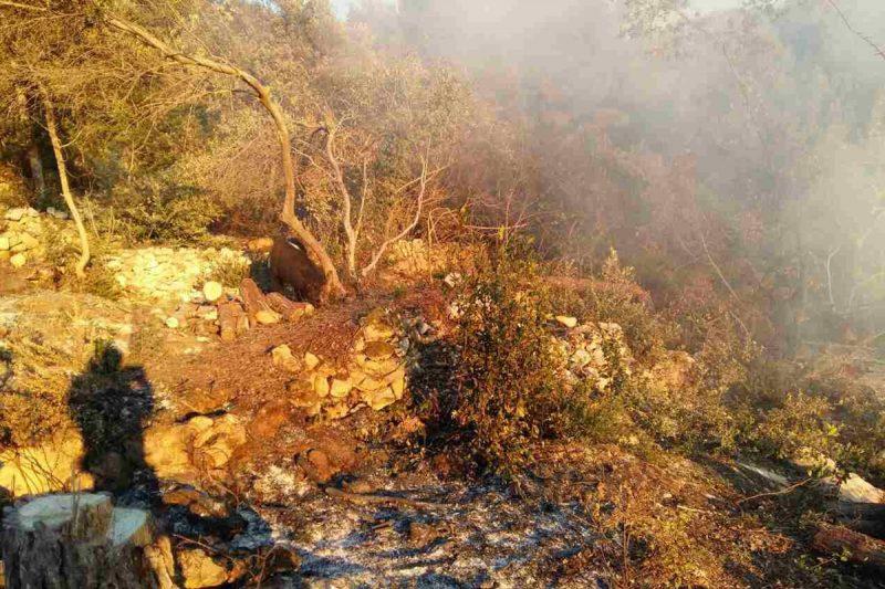 SVAKA ČAST Konavoski vatrogasci izgasili požar na Stravči