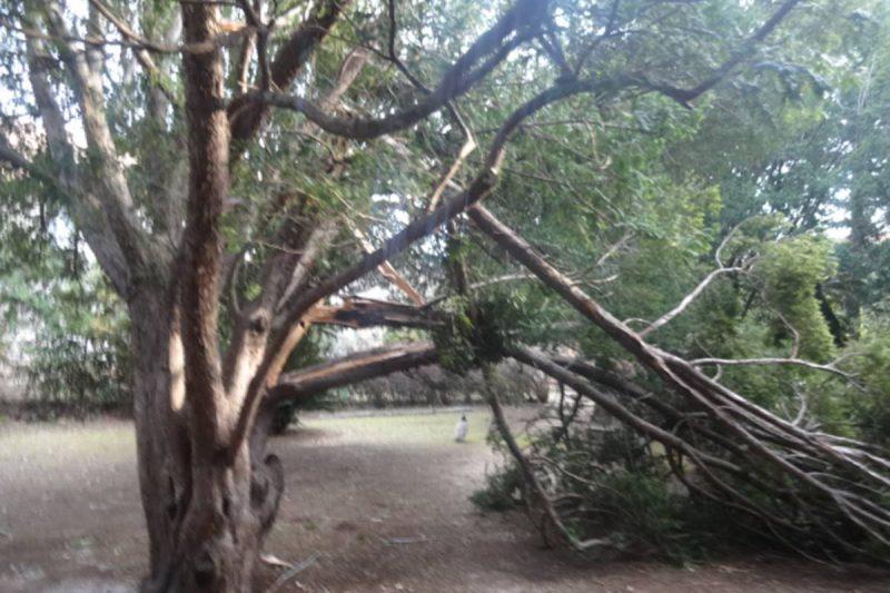 FOTO Nevrijeme poharalo i Lokrum, oštećeno 50 stabala