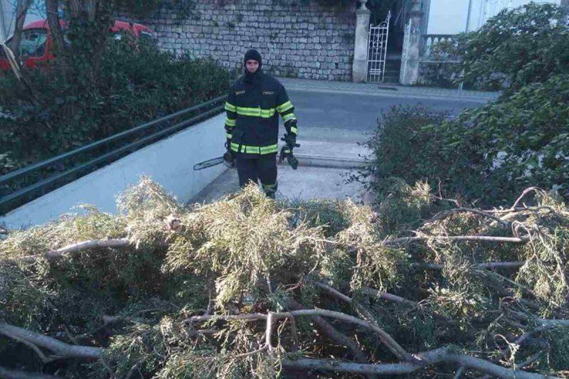 FOTO/ VIDEO Vatrogasci i danas rade 'tutta forza': Vjetar lomi stabla