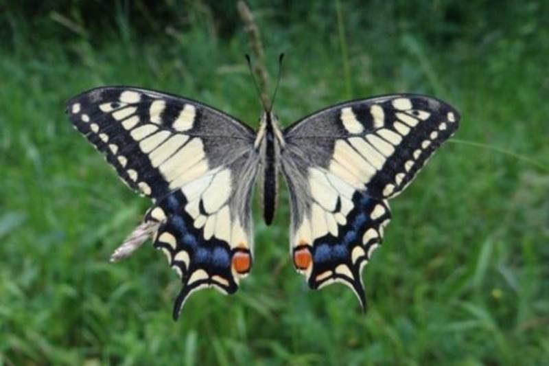 Izložba 'Lepidoptera'