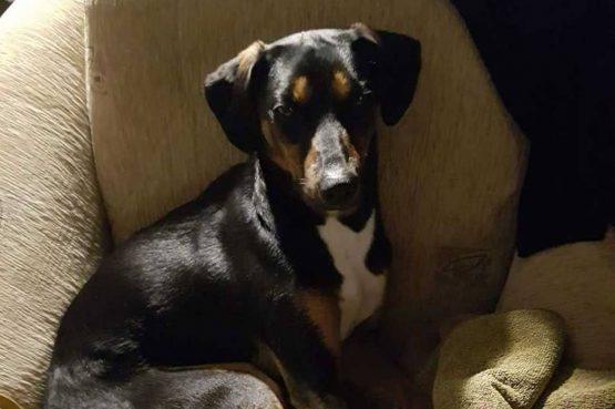 Lucy je pobjegla sinoć od vatrometa, jeste li je vidjeli!?