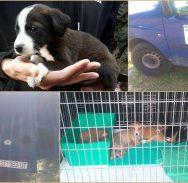 DRAMA U SOLITUDU Dr. Filipović opet 'u akciji', volonteri pokušavaju zadržati pse