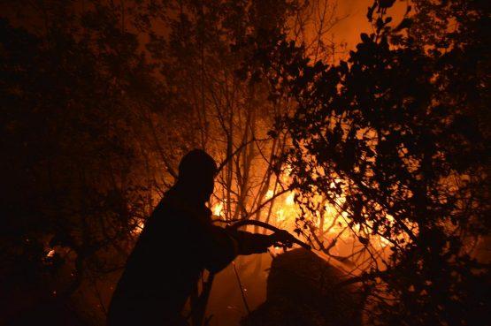 U Buićima planula šuma i nisko raslinje