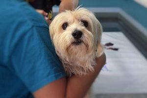 PRIJATELJI ŽIVOTINJA PREDLAŽU PROMJENE Prekomjerno cijepljenje ide na štetu zdravlja pasa