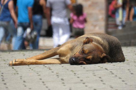 Krenule kontrole mikročipiranja pasa