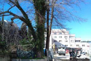 EKO OMBLIĆI Zašto se događa bezdušna sječa stabala?