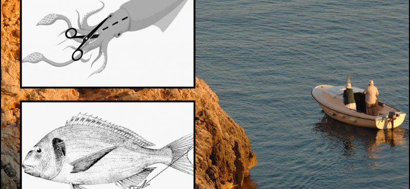 SPORTSKI POZDRAV IZ VLADE Ostavite se ribolovaca, kontrolirajte restorane