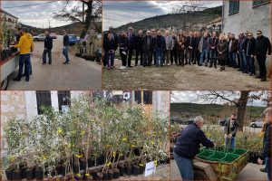 U KONAVLIMA Rotary club podijelio besplatne sadnice maslina
