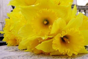 SUBOTA U ŽUTOJ BOJI Postoji li ljepši način za pomoći od kupovine cvijeća?