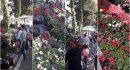 SAJAM Velika cvjetna završnica u Uvali Lapad!