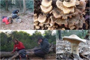 ZANIMLJIV ZNANSTVENICIMA Terensko istraživanje gljiva na Lokrumu