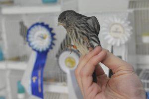 PRVENSTVO U NIZOZEMSKOJ Medalje svjetskog sjaja za naše uzgajivače ptica