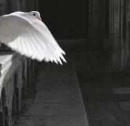 MALENI GRADSKI STRAŽARI Zamahom krila od dna do visina