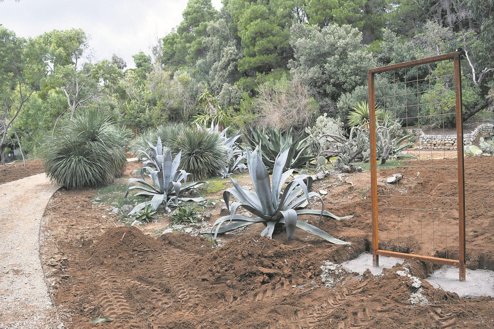 Obnavlja Se Botanicki Vrt Na Lokrum Se Vracaju Agrumi I Staklenik